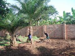 farmersfamiliesfutureuganda05497